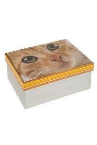 Geschenkbox Kätzchen Mimi