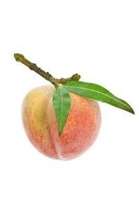 Deko-Frucht Pfirsich
