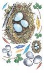 Rubbel-Sticker Vogelnest mit bunten Federn